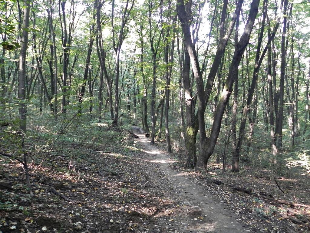 Kosutnjak park Belgrade